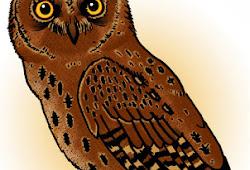 Perlindungan Burung Hantu Di Indonesia Anekahewan Com