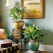 Winter Care of Houseplants