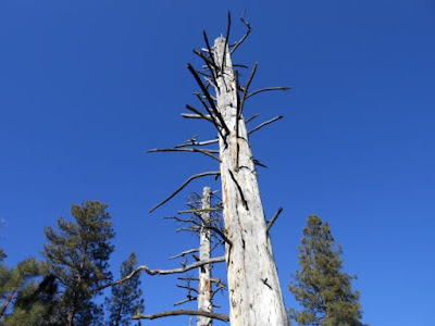 spiritual humility, tree, blue sky, dead tree