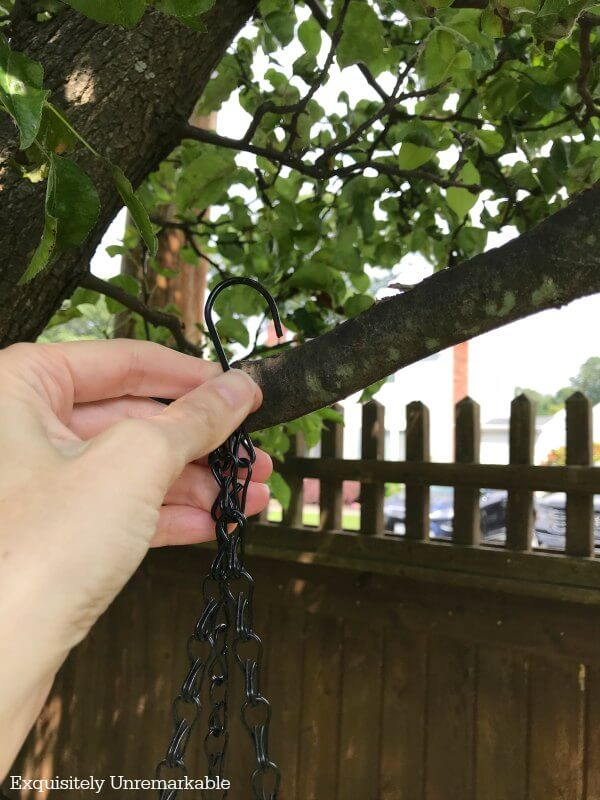 Hanging bird feeder chain on tree branch