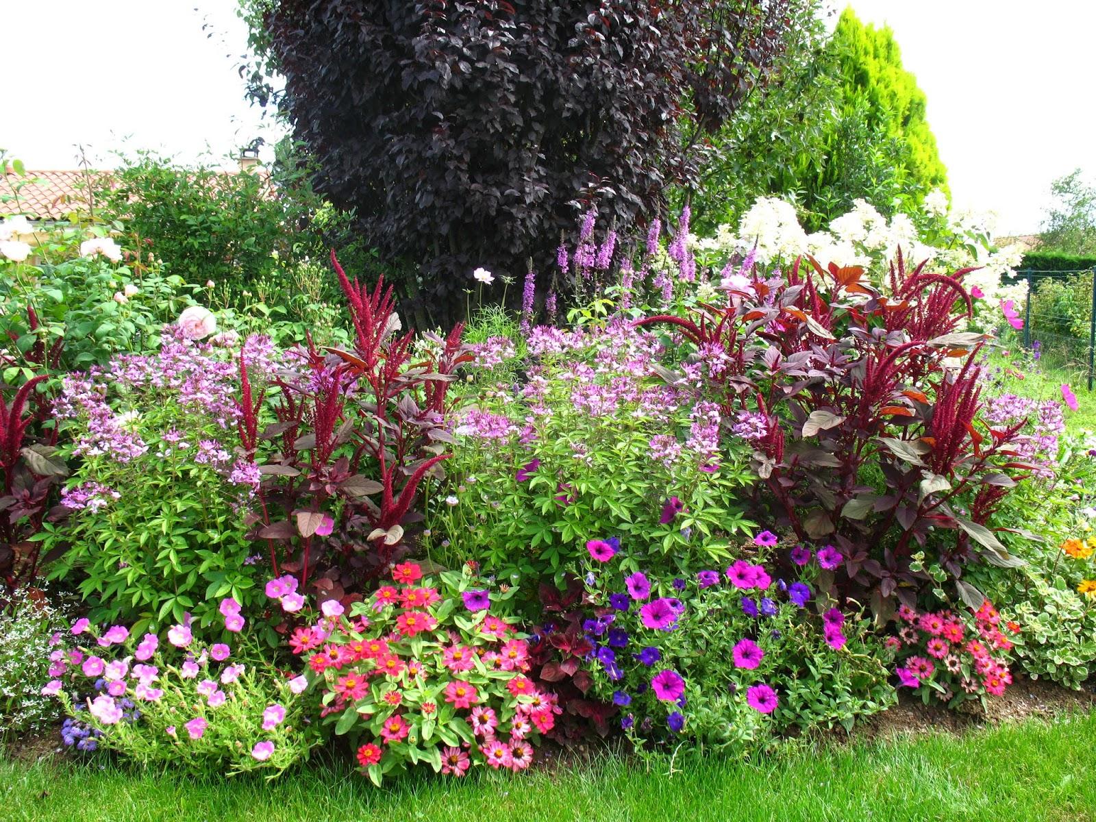 Roses du jardin ch neland changement de saison nouveau d cor for Parterre de roses photos
