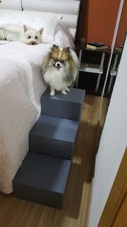 escadas tres degraus para cães