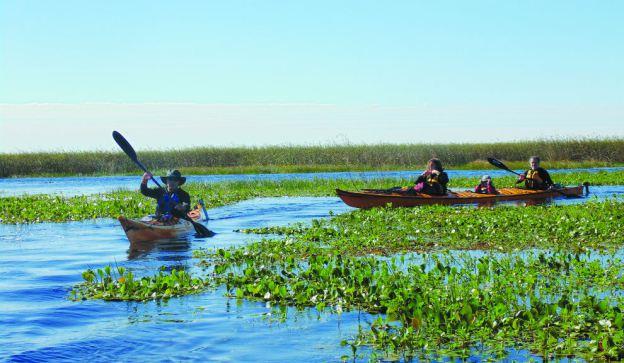 Iberá, Corrientes: la vida en los Esteros Kayak
