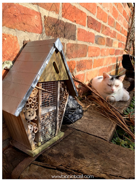 sMOOCH AND THE BUG HOTEL ©BionicBasil® The Pet Parade 341