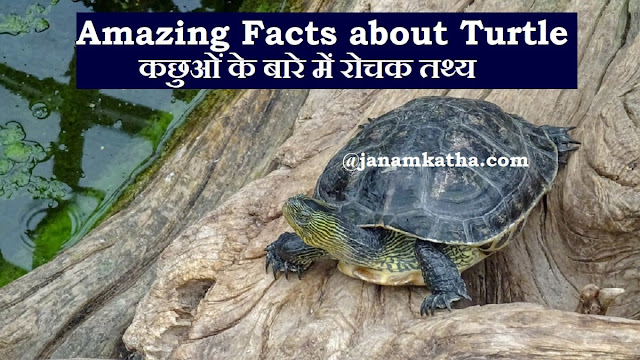 Amazing Facts about Turtle and Tortoise in Hindi - कछुओं के बारे में रोचक तथ्य