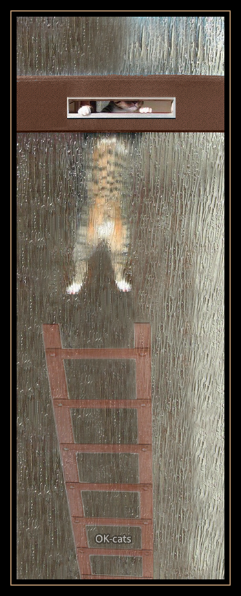 Photoshopped cat picture • HALP! Clumsy climbing high ladder and hanging on door (huge mistake)