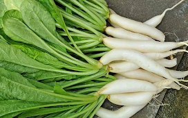 Nutrition and Benefits of Radish Leaves for Body Health