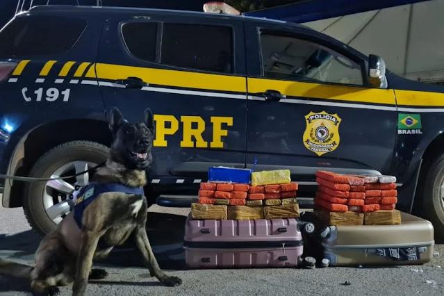 Cão K9 Baruk, da PRF encontra drogas em malas