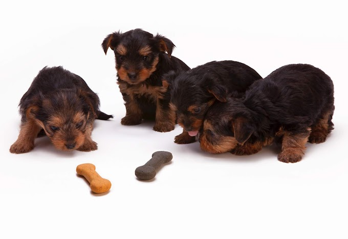 Your Guide to the Different Types of Dog Treats