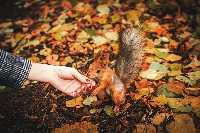 person-holding-squirrel