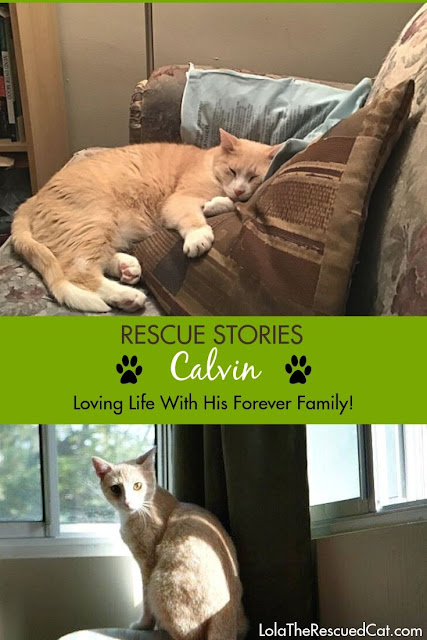 Rescue Stories