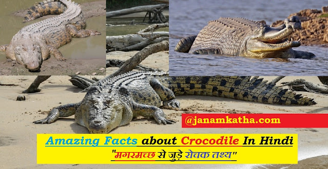 Crocodile In Hindi | Essay On Crocodile In Hindi | Amazing Facts about Crocodile In Hindi