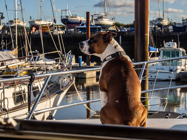 Photo of Ruby on look-out duty on Ravensdale's foredeck