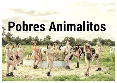 Estudiantes australianos de Veterinaria se desnudan en una granja
