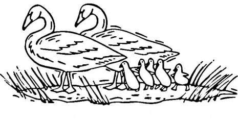swan coloring pages for kids - photo#29