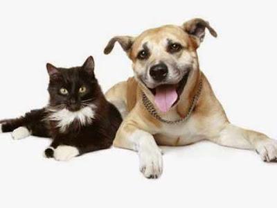 Un gatto e un cane