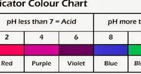 Mr Trent S Classroom Red Cabbage Ph Indicator Lab