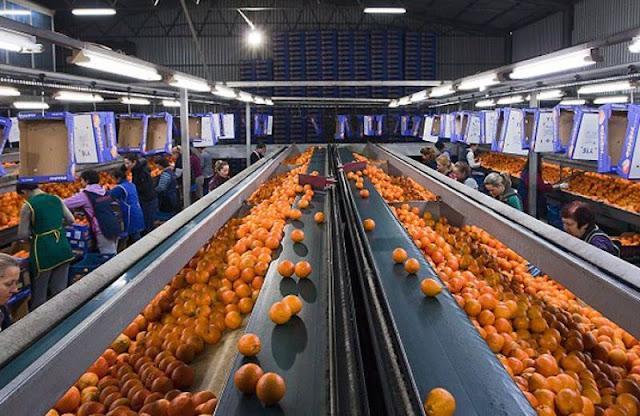 Θέση εργασίας για γεωπόνο σε Εξαγωγική Εταιρεία Φρούτων στην περιοχή του Άργους