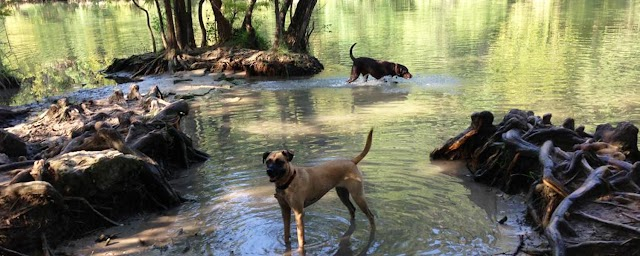 Νέο φως στο μακρινό παρελθόν των σκύλων