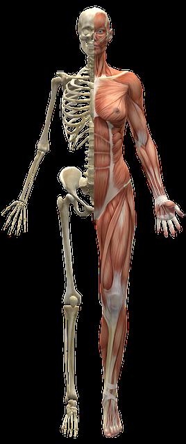 Principales órganos Del Cuerpo Humano Y Sus Funciones