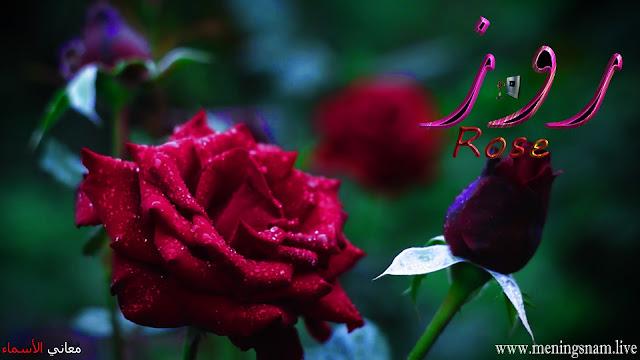 معنى اسم روز وصفات حاملة هذا الاسم Rose