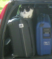 Koffer im Auto mit Nachbarkater