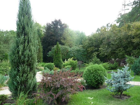 Донецьк. Ботанічний сад. Дендрарій