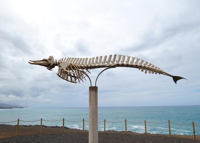 Esqueleto Ballena - Fuerteventura