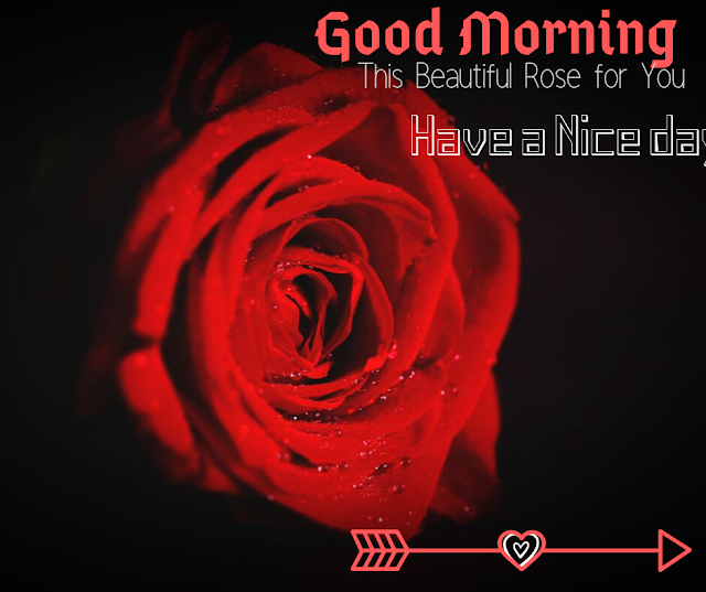 Good Morning Images with Beautiful  Red Rose