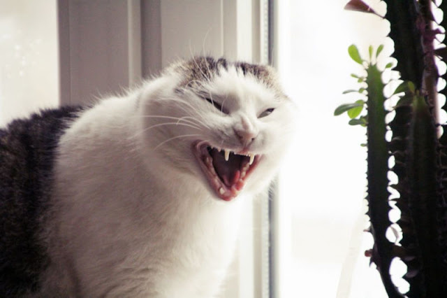 Aggression Against Humans: Why Cats Bite Or Beat