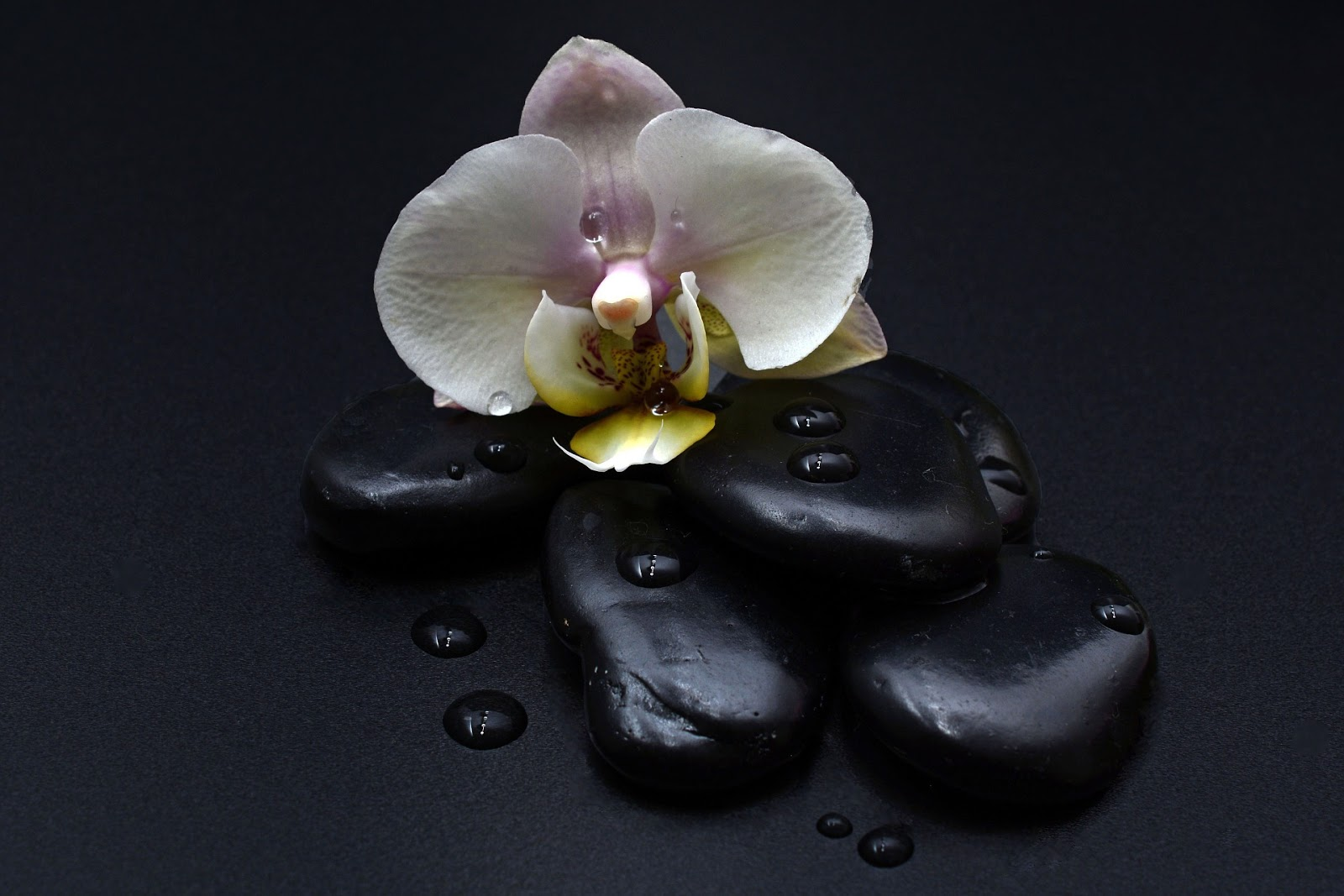 gambar bunga anggrek hitam putih