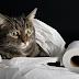 Πώς θεραπεύουμε την διάρροια στην γάτα;...