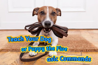Teach Your Dog or Puppy the Five asic Commands