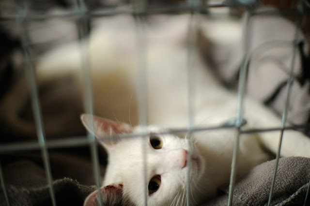 The Importance of Vaccination against Cat Diseases