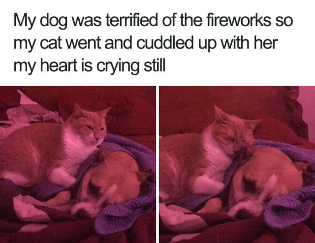 My dog was terrified of the fireworks so my cat went and cuddled up with her my heart is crying still