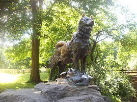 Balto by Central Park Rickshaw Tours