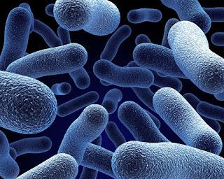 Бифидо- и лактобактерии