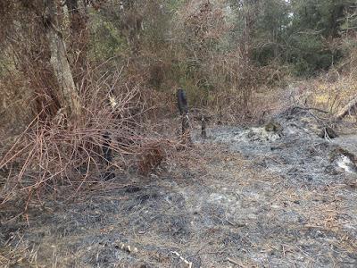 bekas kebakaran di sekitar telaga taman hidup
