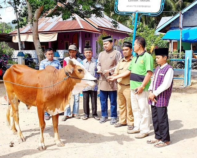 Ustadz Hendri Susanto, LC serahkan satu ekor  sapi korban untuk warga Ponpes Darul Falah Lubuk Tarok