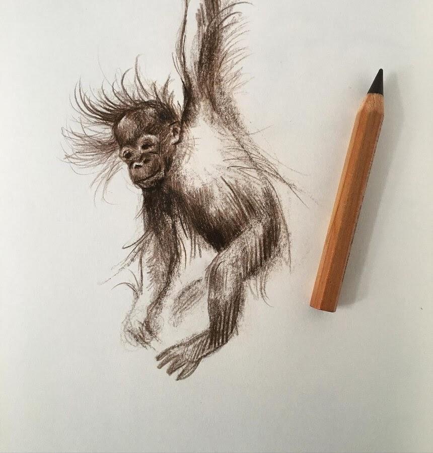 06-Baby-orangutan-Farbe-Und-Fabeln-www-designstack-co