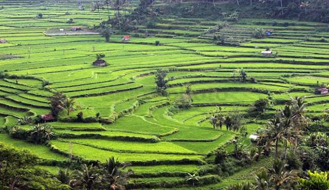 ATRAKSI BUDAYA PALING MENAKJUBKAN DI INDONESIA 10  ATRAKSI BUDAYA PALING MENAKJUBKAN DI INDONESIA