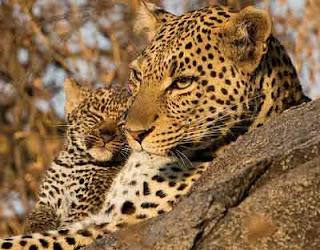 How Leopard Got His Spots African Folktale