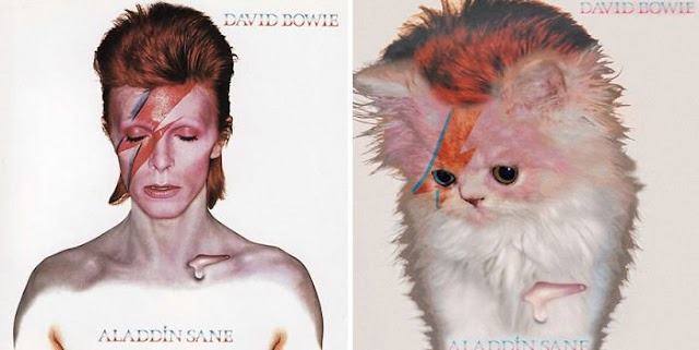 Someone Is Replacing Musicians With Cats In Famous Album Covers, And Result Is Better Than Original