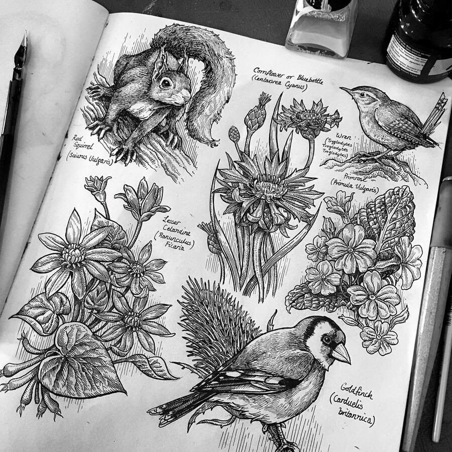 01-Red-squirrel-birds-and-flowers-Philip-Harris-www-designstack-co