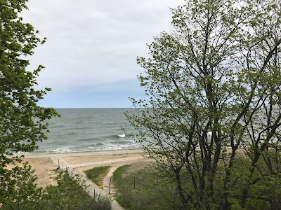 the baltic sea and some trees