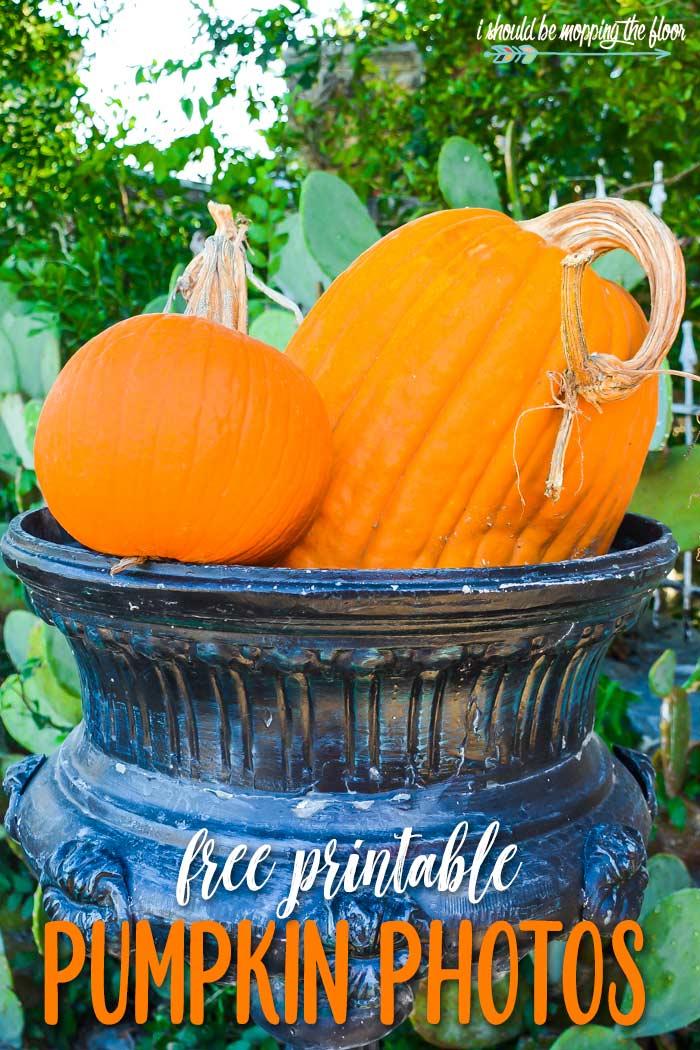 Pumpkin Photography to Print