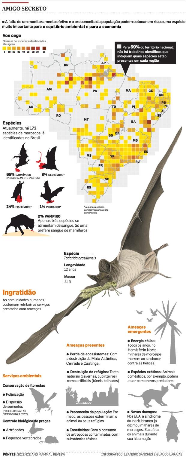 Morcegos e o Agronegócio