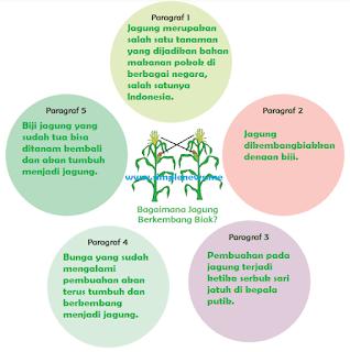 peta pikiran Bagaimana Jagung Berkembang Biak kelas 1 tema 6 www.simplenews.me