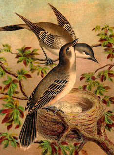 bird antique print image animal artwork digital download