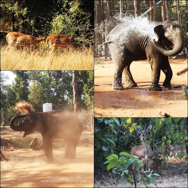 Safari at Bandhavgarh National Park